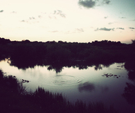 Nighttime Everglades Tour