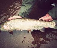 Freestone Fly Fishing Trips