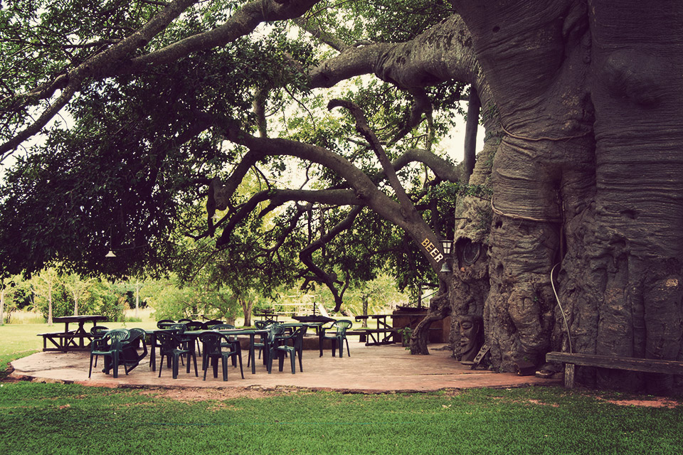 The Big Baobab Tree Bar